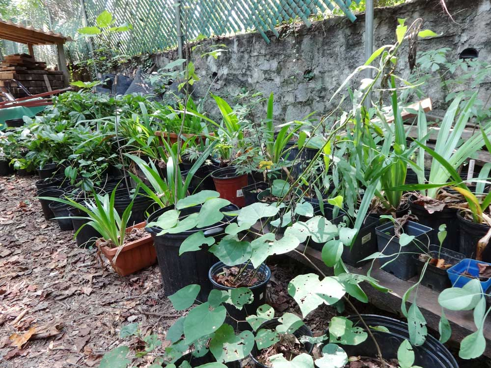 Plants For Sale Woodlands Garden